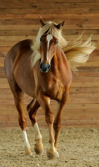 17 Best images about Avau0027s horse folder on Pinterest Rare horses - horse sales contracts