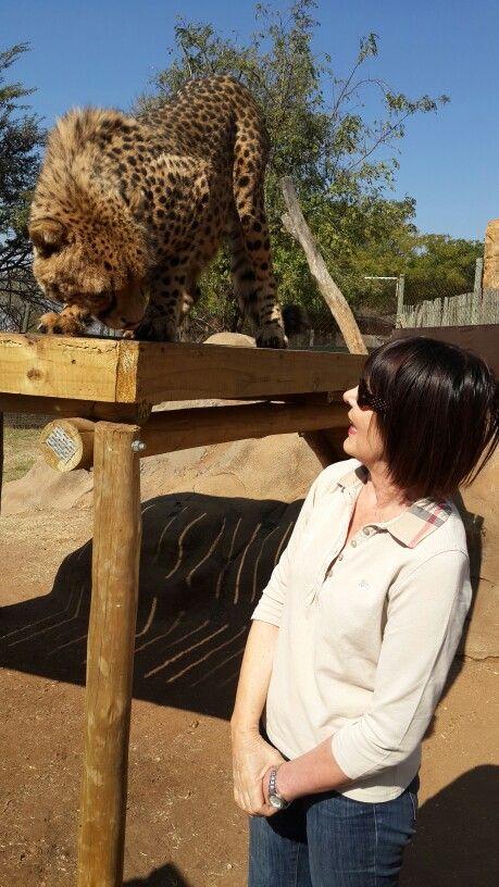Talking to the Cheetah.