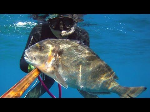 Great #Spearfishing