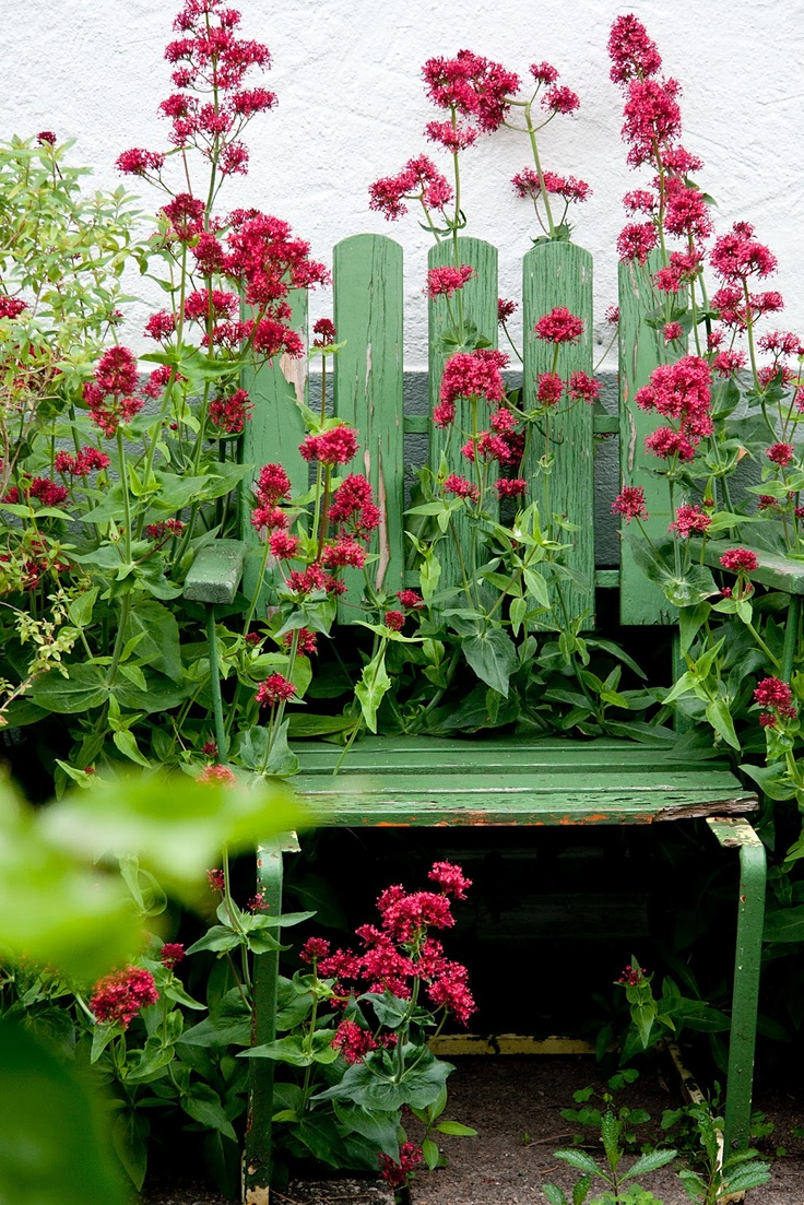 19 best garden images on pinterest | garden ideas, burgundy and