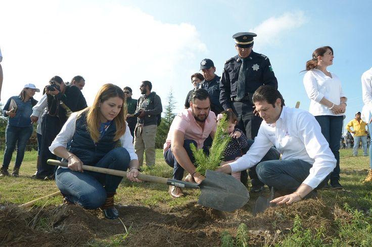 Durante esta primera etapa se plantarán 2 mil 500 árboles de las especies de pino michoacano, cedro blanco y pino greggi, en un total de 3 hectáreas, destacó el alcalde ...