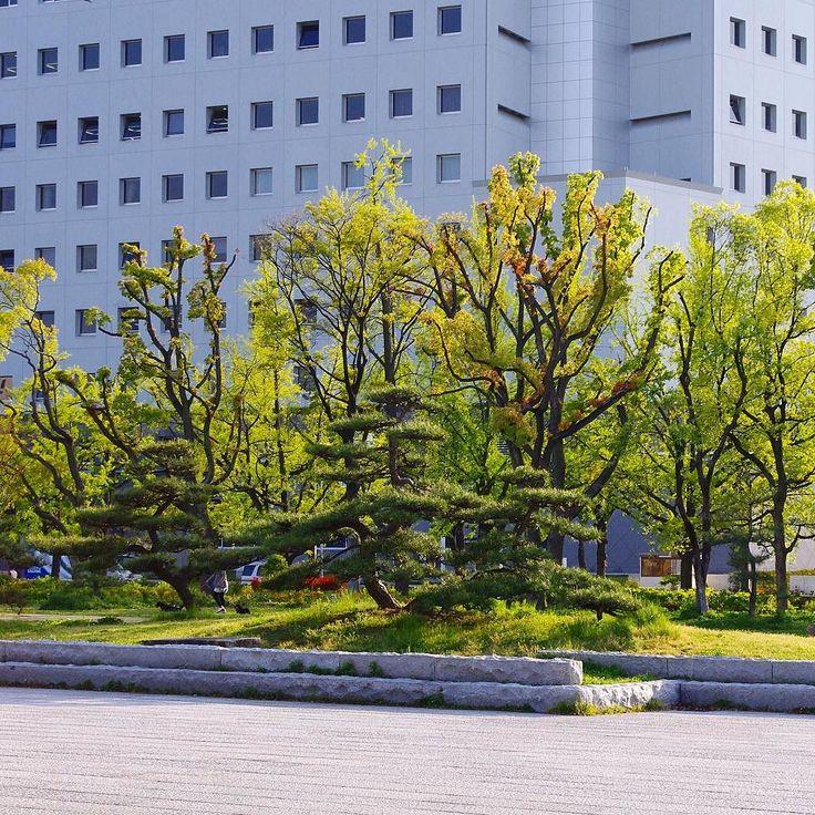 Парк перед полицейским управлением Осаки #Осака #Япония #газон #город #улицы #полиция #сад #японскийсад #парк #парки #сады #зелень