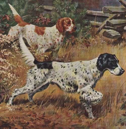 English Setter Vintage Dog art prints, Gifts and Artwork from ...