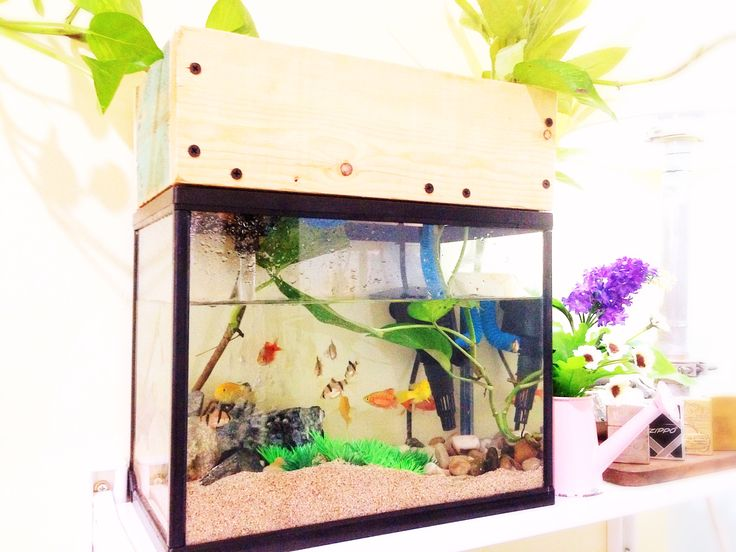 Diy pallet aquarium canopy