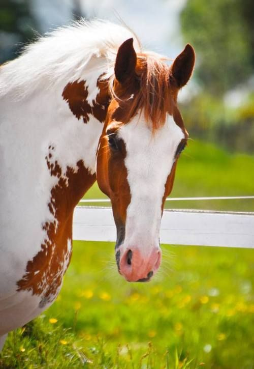 Horse / Hello Gorgeous!!!  (jumentchatain)