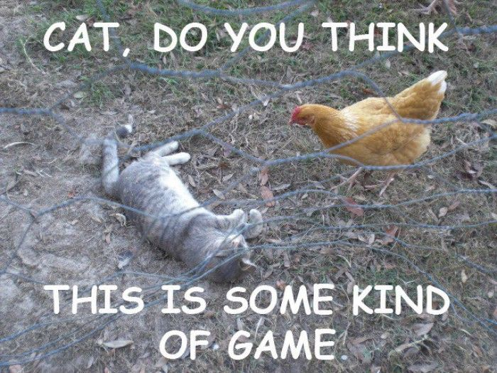 Funny Chicken Jokes: Best 25+ Farm Humor Ideas On Pinterest