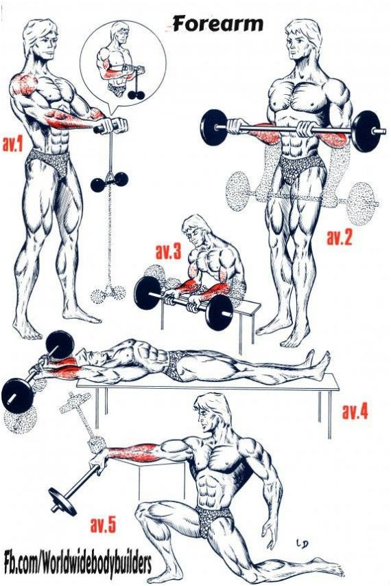 personal_trainer_forearm_workouts_2014-10-13_22-07-06.jpg (570×853)