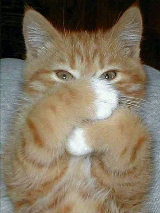 You will find many orange tabbies with black freckles on their noses.
