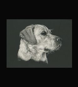 Labrador Retriever -  This is the actual size of the scratch art. This size is intended as example of a memorial for an urn. Smaller work, like this, can easily be done for a pendant or jewellery. I can work from a photo. A web site dedicated to this is planned. In the mean time I can be contacted at sue@suewalters.com #labrador
