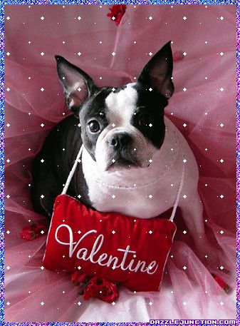 17 best images about valentine 39 s day pets on pinterest - Valentine s day animal pics ...