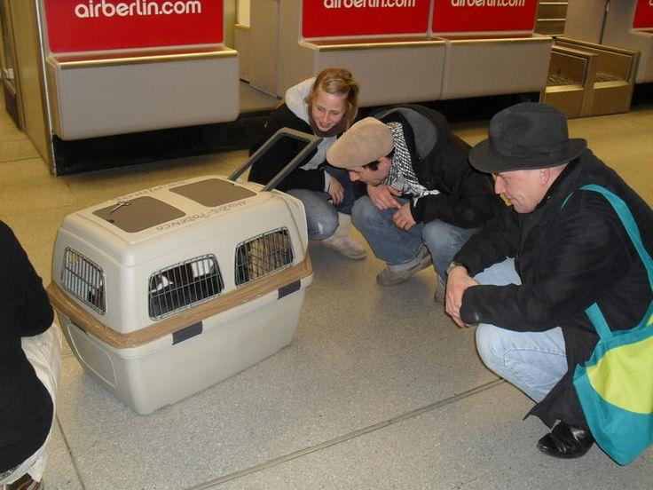 Ankunft Flughafen Tegel 02-2010