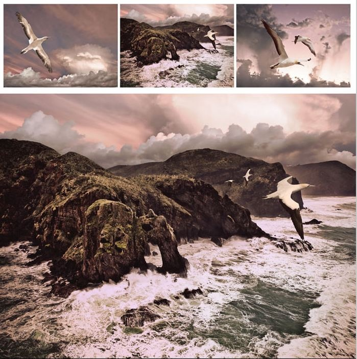 SPIRITS OF THE STORM  (Muriwai Beach, Gannets, Auckland - triptych) by Lucy Gauntlett.   Taken from a helicopter ride over the wild West Coast earlier this year.  It was rather scary as the doors were taken off before we took off and it wasn't the best weather !  Lucy G Creative NZ Photography