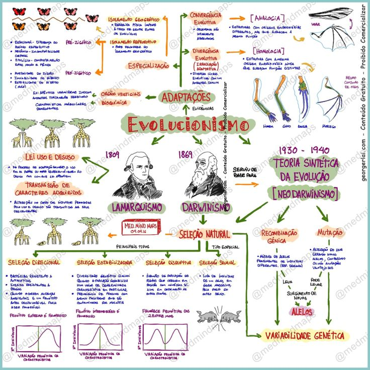 Mapa mental Evolucionismo