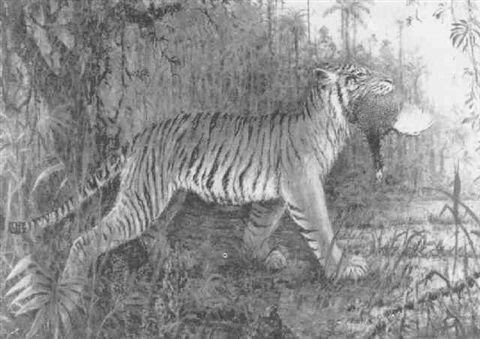 A tiger with his prey by Henri Verstijnen