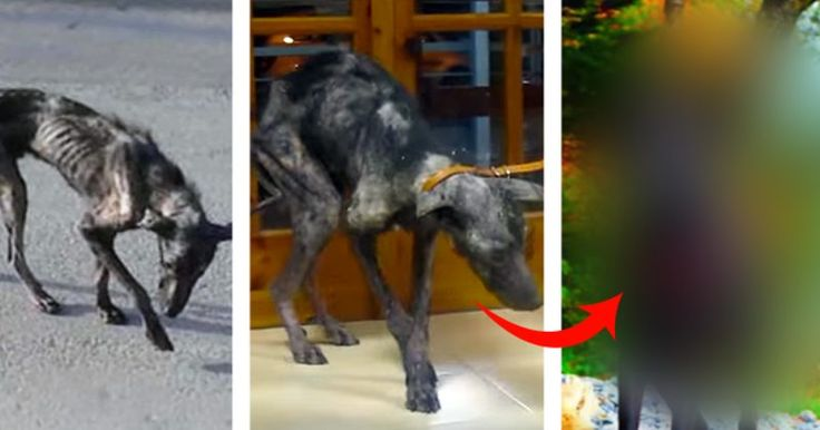 Stray+Dog+On+The+Brink+Of+Death+Was+Given+A+Home+To+Die+In...But+Then+This+Happened!