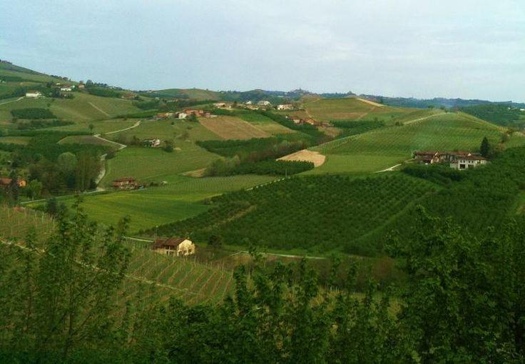 In viaggio in cucina: Le Langhe: colline verdi, cibo delizioso e buon vino... Torta di nocciole