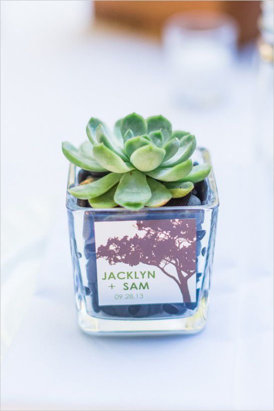Home grown succulent wedding favors. Captured By: Blueberry Photography ---> http://www.weddingchicks.com/2014/05/15/romantic-wedding-under-the-trees/