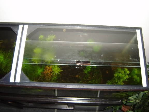 Link Diy How To Guide Sliding Gl Top Aquarium Crabitat Complete With Photos Instructions Check Out