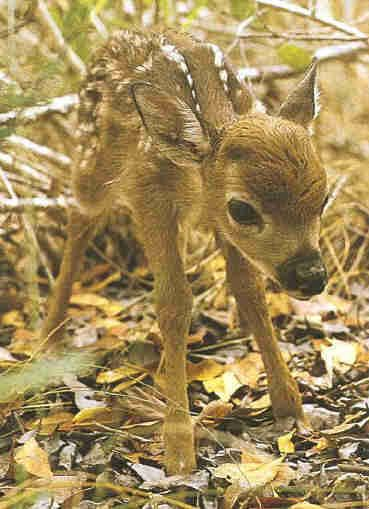 images of all animals | Save all animals in danger