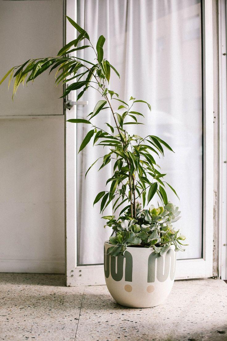 Big Sur Pot Eucalyptus Large in 2019 Pop, scott