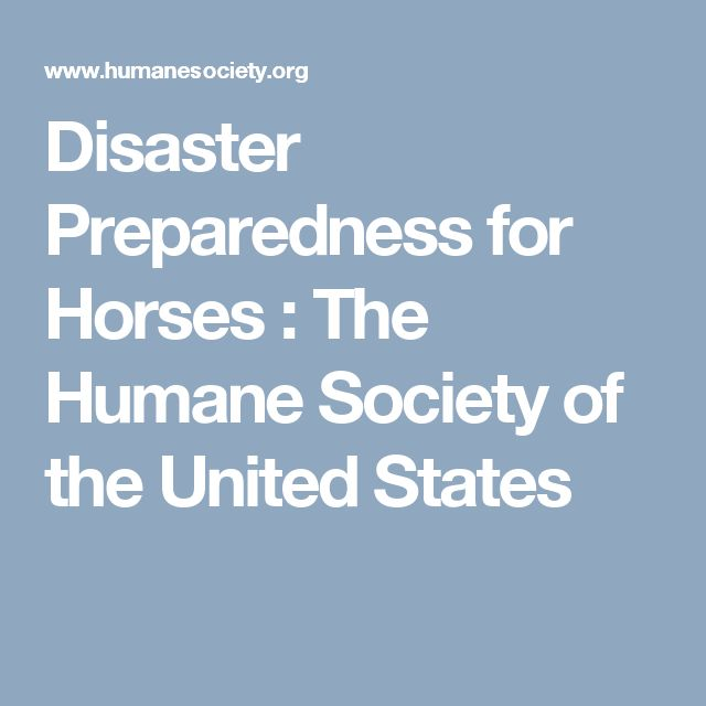 Disaster Preparedness for Horses : The Humane Society of the United States