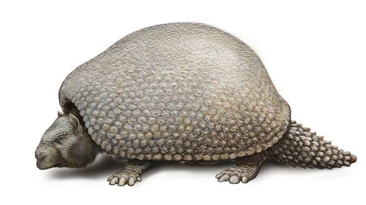 Paläogenetik: Glyptodon war ein Giganten-Gürteltier - SPIEGEL ONLINE - Nachrichten - Wissenschaft