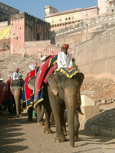 5 Top India Backpacker Tours from G Adventures