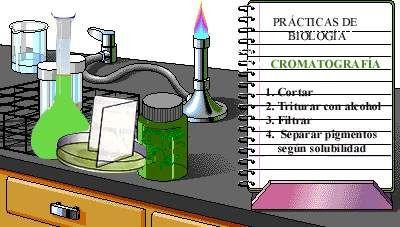 Separación de pigmentos por cromatografía