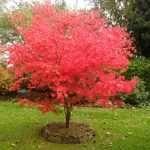 10 árboles para jardines pequeños