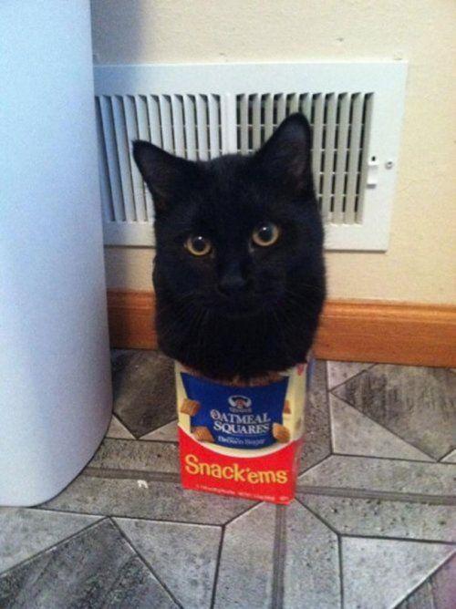 Кошки умеют помещаться во все..)
