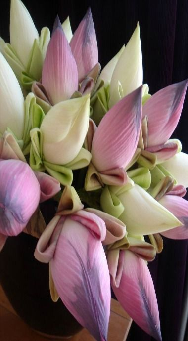Banana flowers. |  Unbelievably beautiful buds of two colors with little folds of leaves (?) beneath. Very elegant for a banana, don't you think?