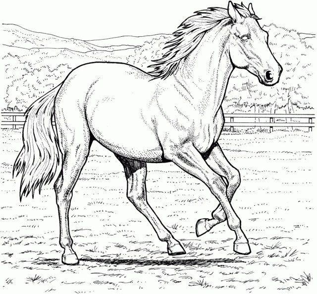 27 Amazing Image Of Coloring Pages Horses Entitlementtrap Com Horse Coloring Pages Animal Coloring Pages Bird Coloring Pages