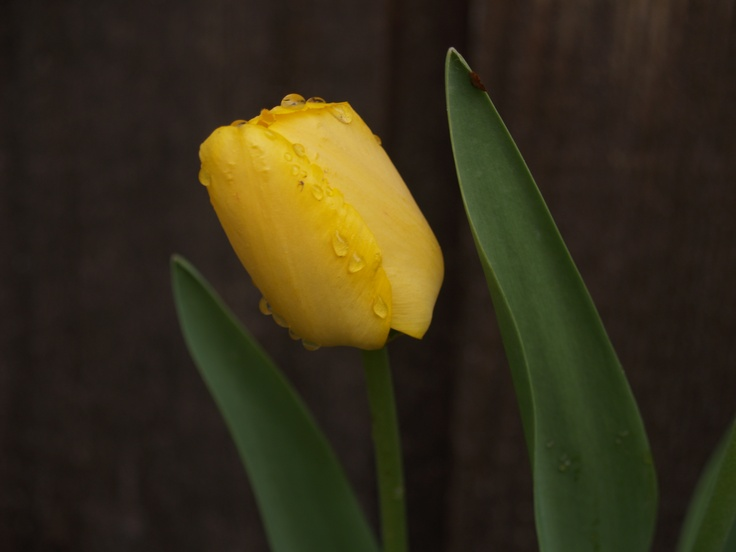 tulip: Inspiration Images