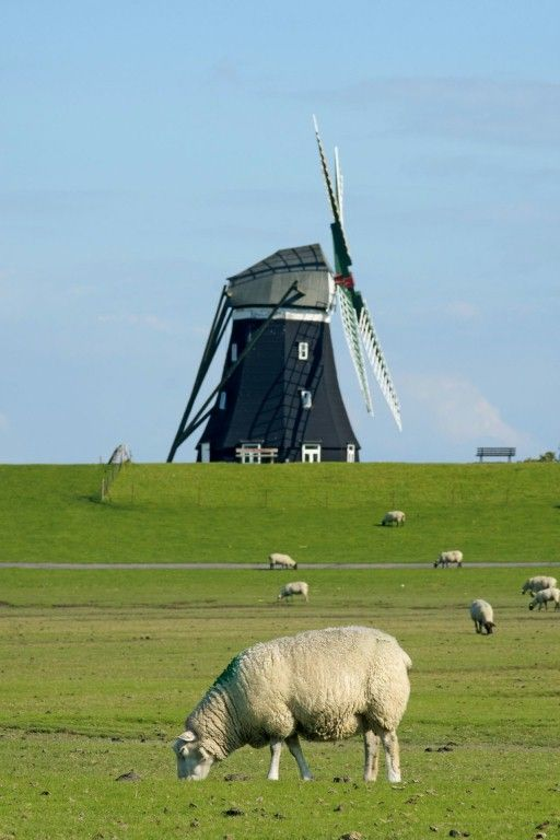Windmill © Kur- und Tourismusservice Pellworm | Islands and Coast in 2018 | Pinterest | Windmill, North sea and Island