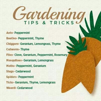 27 best images about doterra for summer on pinterest gardens orange sorbet and hand scrub - Summer time gardening tips ...