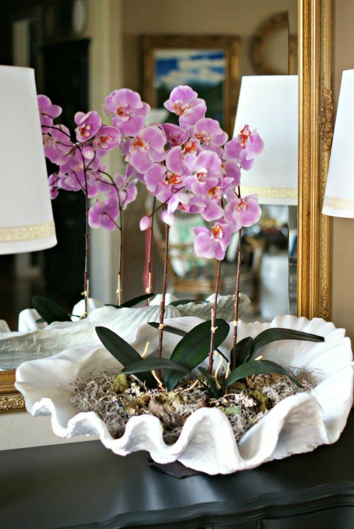 1000 Ideas About Faire Refleurir Une Orchid E On Pinterest Une Orchid E Fleur Orchid E And L