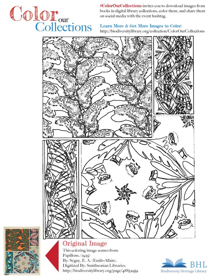 """#ColorOurCollections. Original Image: http://biodiversitylibrary.org/page/48852959. To download this image, right click on the pin and choose """"save image as"""" to save the image to your computer. You can then print and color at your leisure!"""