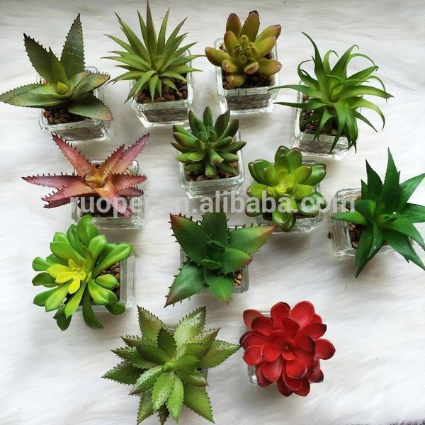 Artificial Succulent Plant Bonsai Potted Small Plant , Find Complete Details about Artificial Succulent Plant Bonsai Potted Small Plant,Artificial Succulent Plants,Succulent Plants Tropical Plants,Cheap Artificial Plants from -Yiwu Ruopei Arts & Crafts Co., Ltd. Supplier or Manufacturer on Alibaba.com