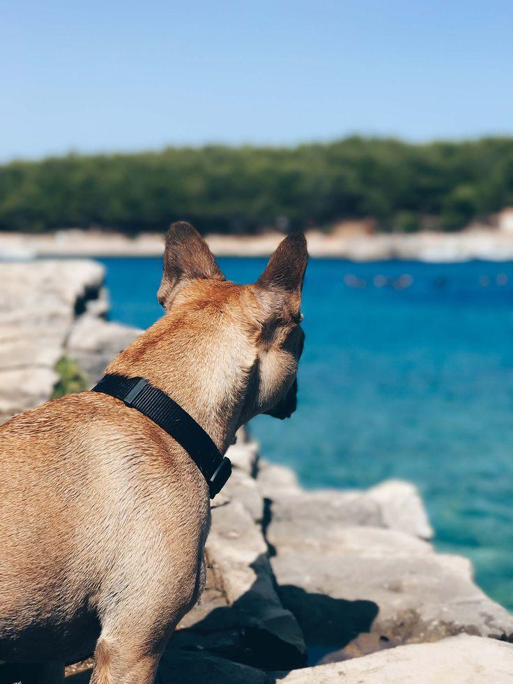 Reise Checkliste Fur Urlaub Mit Hund Packliste Fur Hunde Alltag Und Leben Mit Hund Tipps Und Tricks Fur Den Hundeurla Urlaub Mit Hund Reisen Hunde