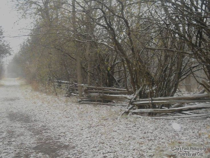 Snow falling on Potters Creek conservation