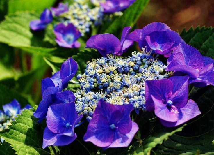 kék kék  blue