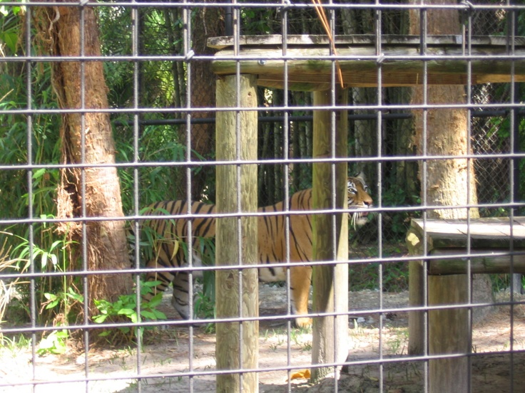 18 best Naples Zoo images on Pinterest Zoos Fun things and