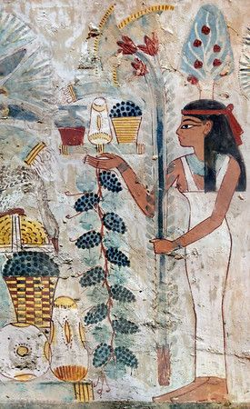 "*TREE GODDESS, IN NAKHTS TOMB @ LUXOR:presenting several offerings to the deceased on a tray:beer,an elongated bread,a cup of grapes+a bunch of onions. Suspended from her rt hand hangs a grape vine+in the lt she holds3stems of papyrus.Although there is no text here that describes her,the tree goddess or""lady of the Sycamore""is usually identified w/either Nut,Hathor orIsis.In most tombs she is portrayed as a wood nymph w/in the tree, but here she is shown w/an emblematic sycamore tree on her…"