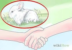 How to buy a rabbit