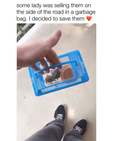 SAVE THE TURTLES 😍