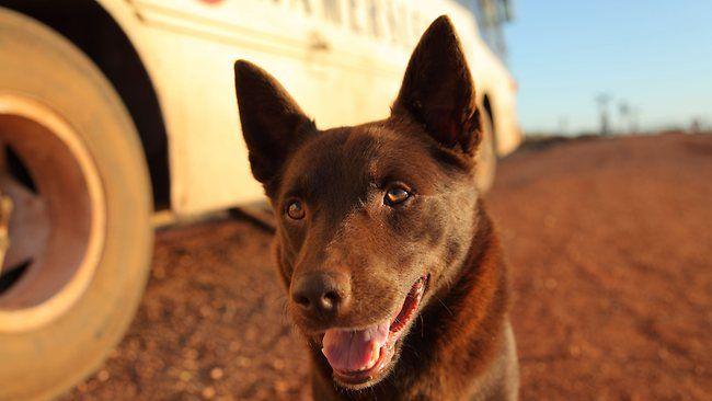 Backyard Cinema: Red Dog - 2012-Feb-03 | Film