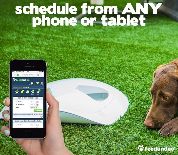 automatic dog feeders, dog feeder, auto dog feeder, these are a great way to keep your dog on schedule while you are at work by using your smart phone you can even check in on him.