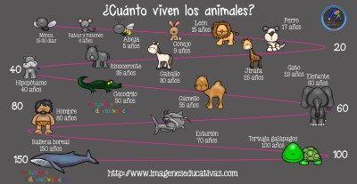 Jako živá zvířata (2) - Obrázky školství