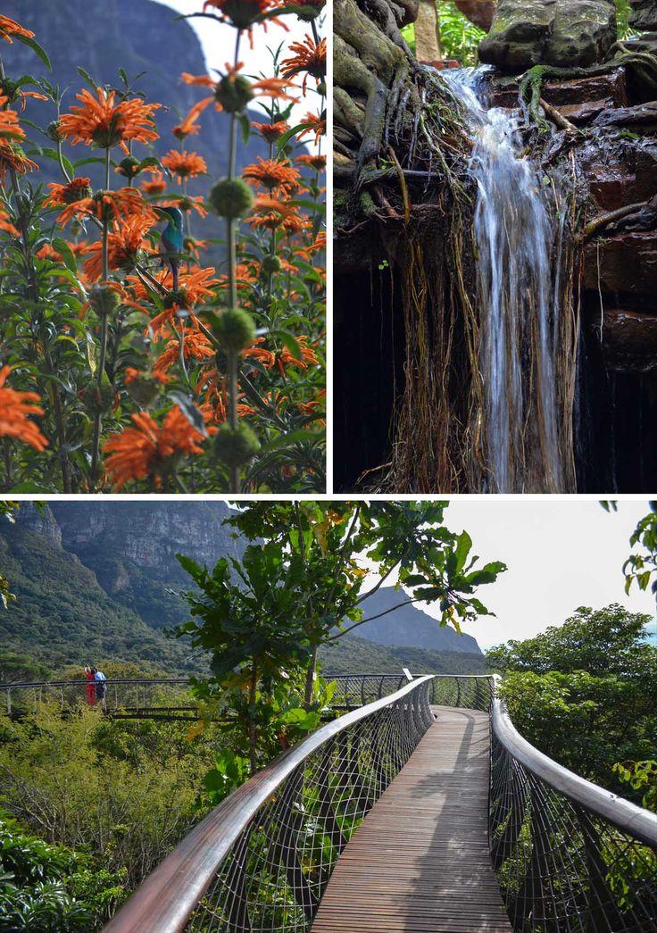 The Boomslang at Kirstenbosch Botanical Gardens, Cape Town | heneedsfood.com