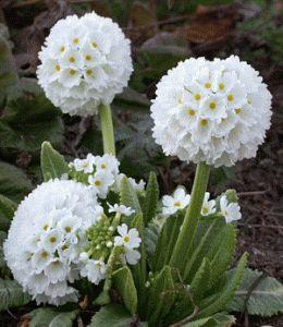 Perennial Flower Garden Ideas Pictures 42 best perennials images on pinterest | flower gardening, flowers